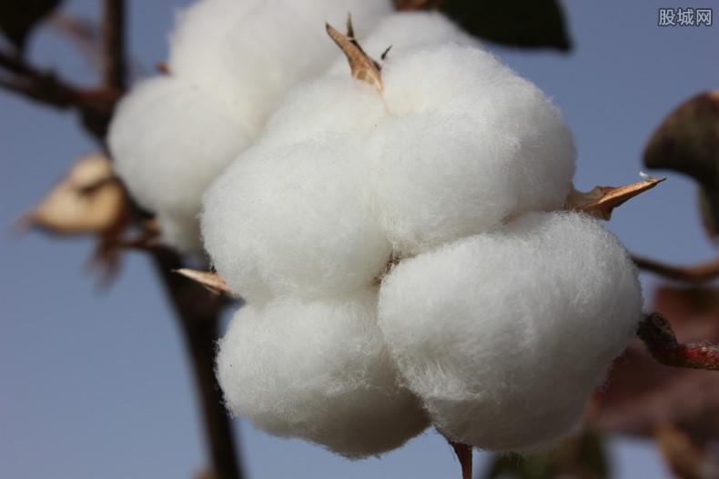 新疆棉花事件是怎么回事 起因缘由原来是这样的