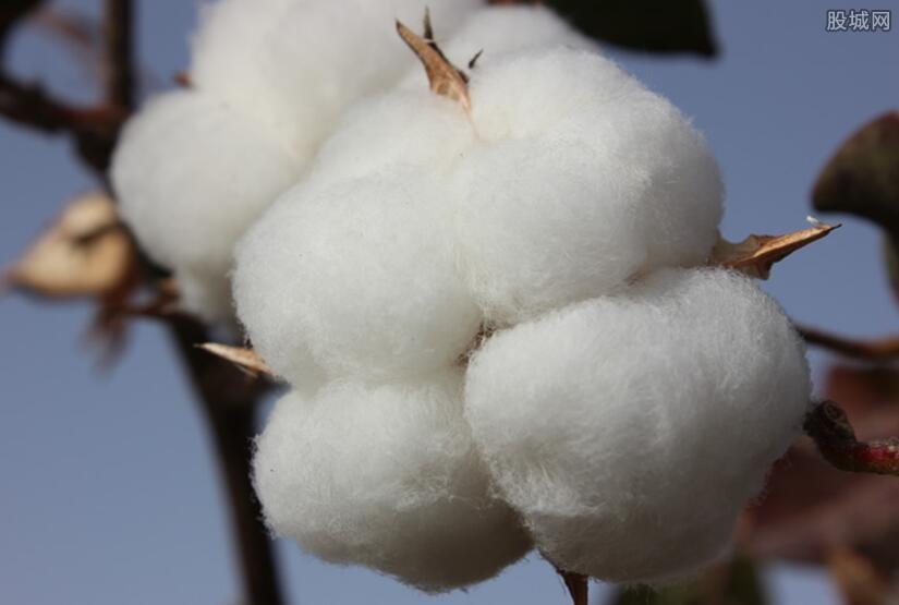 新疆棉花事件发声亮剑 国货齐表态支持谁不用谁损失